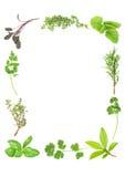 Herbes aromatiques fraîches Images libres de droits