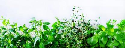 Herbes aromatiques fraîches vertes - mélisse, menthe, thym, basilic, persil sur le fond blanc Cadre de collage de bannière des us image libre de droits