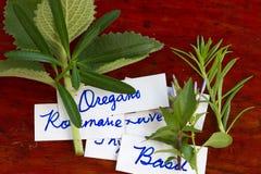 Herbes assorties Photo libre de droits