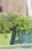 Herbes assorties Images stock