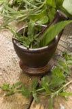 Herbes avec le mortier en bois photos libres de droits