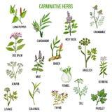 Herbes carminatives Ensemble tiré par la main Images stock