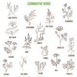 Herbes carminatives Ensemble tiré par la main Photos stock