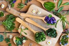 Herbes comestibles sauvages de ressort sur les cuillères en bois Photos stock