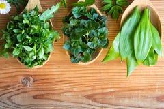 Herbes comestibles sauvages de ressort sur trois cuillères en bois Photo stock