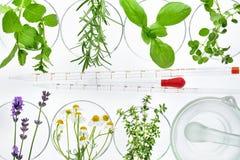 Herbes, compte-gouttes et mortier frais image libre de droits