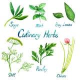 Herbes culinaires réglées : Sauge, menthe, feuilles de baie, aneth, persil, ciboulette illustration de vecteur