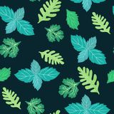 Herbes culinaires vertes coriandre, menthe, menthe poivrée, arugula et pe Illustration Libre de Droits