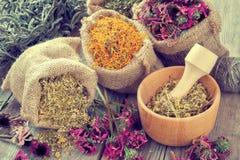 Herbes curatives dans les sacs hessois, mortier avec la camomille photos stock