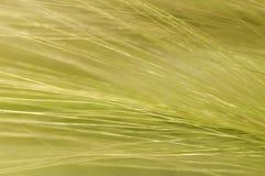 Herbes d'écoulement Image libre de droits