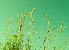 Herbes d'été Image stock