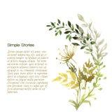 Herbes d'aquarelle et fleurs, fond Photos stock