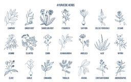 Herbes d'Ayurvedic, ensemble botanique naturel illustration libre de droits