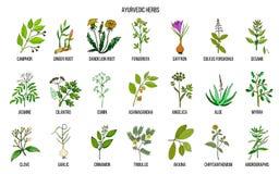 Herbes d'Ayurvedic, ensemble botanique naturel illustration de vecteur