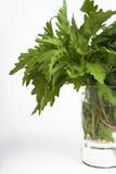 Herbes d'Epazote photographie stock libre de droits