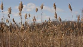 Herbes d'hiver Photo stock