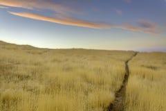 Herbes d'or le long d'une traînée en Idaho Image stock