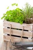 Herbes dans le cadre en bois Photos libres de droits