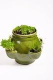 Herbes dans le flowerpot photographie stock libre de droits