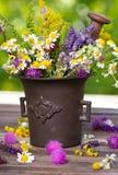 Herbes dans le mortier photo stock