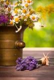 Herbes dans le mortier photos stock
