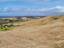 Herbes dans un paysage australien Images stock