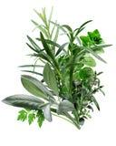 Herbes de普罗旺斯(草本的组合) 免版税库存照片