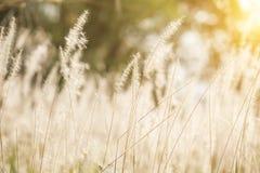 Herbes de coucher du soleil Photo libre de droits