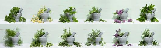 Herbes de cuisine Photographie stock