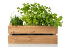 Herbes de cuisine dans la caisse en bois Photo libre de droits