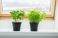Herbes de cuisine de Basil et de persil Photos stock