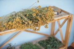 herbes de guérison séchant sur le support Le perforatum de fines herbes de Medicine image stock