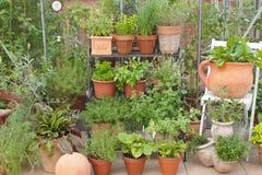 Herbes de jardin dans des pots et la serre chaude Photographie stock libre de droits