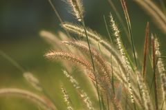 Herbes de matin Photographie stock libre de droits