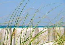 Herbes de mer sur la dune Image stock