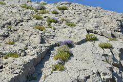 herbes de montagne Photos stock