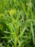 Herbes de nature image stock