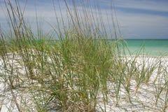 Herbes de plage Photographie stock libre de droits