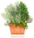 Herbes de Provence in Clay Planter. Rosemary, Fennel, Flat Leaf Parsley, Thyme, Oregano, Lavender, clay flowerpot. Herbes de Provence is a classic blend of Royalty Free Stock Images