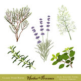 Herbes de Provence, Herb Blend. Herbes de Provence, a traditional French herb blend from the south of France: Thyme, Sweet Lavender, Sweet Fennel, Rosemary Stock Photo