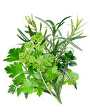 Herbes de Provence (kombinacja ziele) obrazy royalty free