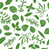 Herbes de Provence seamless pattern vector set Royalty Free Stock Photography