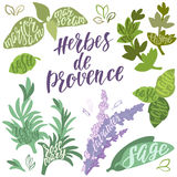 Herbes de Provence. Set of  colorful spices and herbs from French Provence for design on white background. Vector illustration and handwritten brush lettering Royalty Free Stock Image