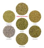Herbes de Provence with single ingredients, herbal circles royalty free stock photos