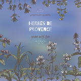 Herbes de Provence template on blue with color botanical sketches. Herbes de Provence template on blurred background with color botanical hand drawn sketches Stock Images