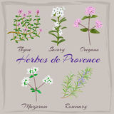 Herbes de Provence. Thyme, Savory, Oregano Marjoram Rosemary Vector illustration Royalty Free Stock Photo