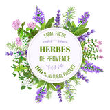 Herbes de Provence. Thyme, Savory, Oregano, Marjoram, Rosemary. Vector illustration. Herbes de Provence. Bunch of farm fresh herbs. Design for cosmetics Royalty Free Stock Photos