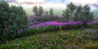 Herbes de saule dans un paysage brumeux photo libre de droits