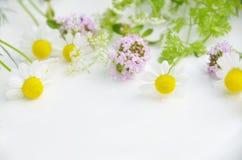 Herbes de source Image libre de droits