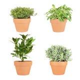 Herbes de thym, de sauge, de compartiment et de lavande Image stock